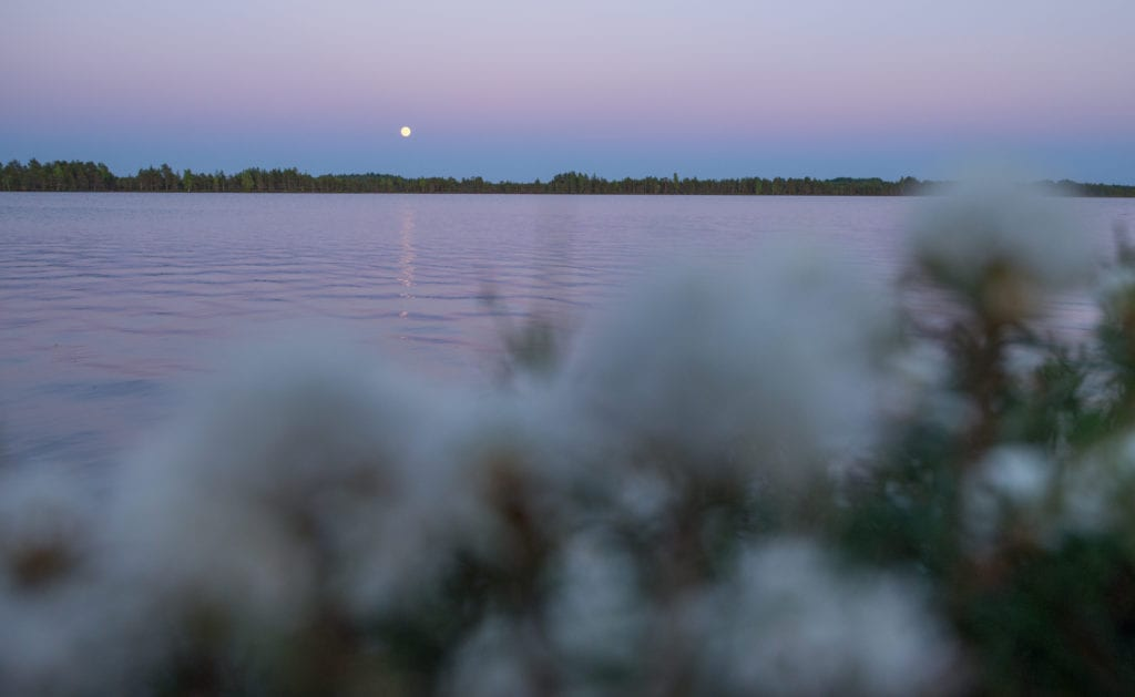 lake_loosalu