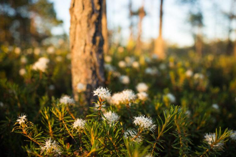 bog-in-spring