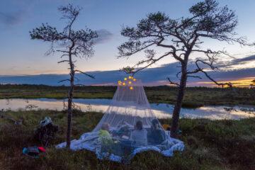 picnic-in-bog
